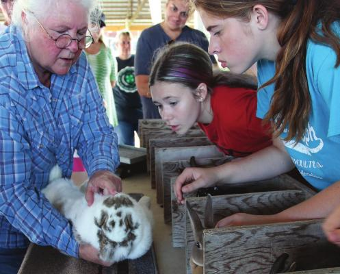 TO ASSIST youngsters in raising rabbits by giving them an understanding of what judges look for in the the rabbit's fur and body, judge Sharon Stephen gives an up-close evaluation during the 2019 Ray County Fair. Rabbits that do well at the county level are typically in a position to move on to the Missouri State Fair, but due to a disease – one that affects rabbits, not people – the state will not have a rabbit show this year. J.C VENTIMIGLIA | Staff