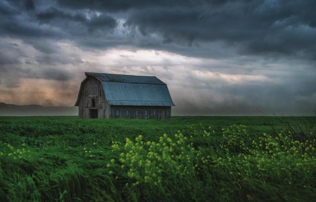 """WEATHERING THE STORM,"" by Christine Peper of Jefferson City, receives state's top photo award. CHRISTINE PEPER 